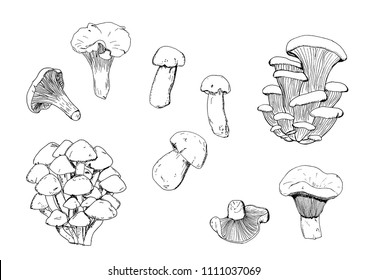 Hand drawn vector vintage illustration. Mushrooms set, edible boletus in retro sketch vector style. Chanterelle. White mushroom. Milk mushroom. Honey agarics. Oyster mushroom. Black, white.