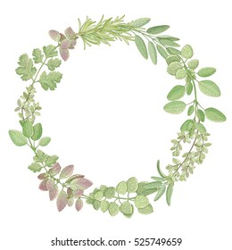 Hand drawn vector wreath with kitchen herbs isolated on white background