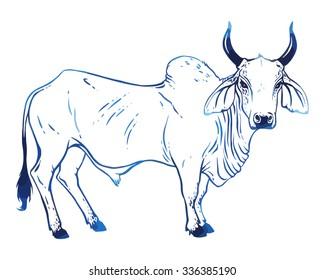 Hand drawn vector zebu