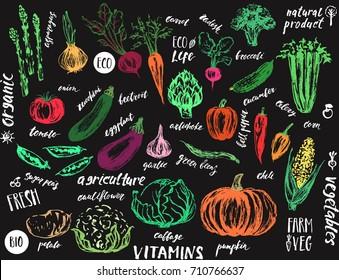 Hand drawn vegetables. Asparagus; artichoke; onion; tomato; potato; cabbage; cauliflower; garlic; pumpkin; zucchini; corn; bell pepper; beans; eggplant; celery; beet; carrot; cucumber; chili; radish