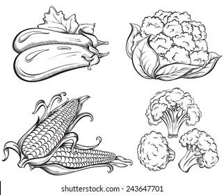 Hand Drawn Vegetables Set. Corn, cauliflower, broccoli, eggplant isolated on white background. Vector illustration