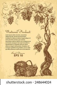 hand drawn vine with grapes, baskets and copy-paste space