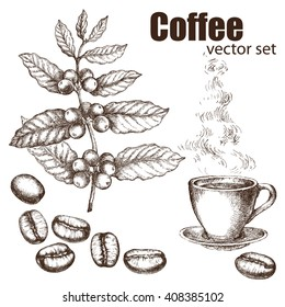 Hand drawn vintage coffee plant. Elements for the graphic design of the menu bars, restaurants, invitations, announcements. Coffee beans and coffee cup.  The steam rising from the hot coffee.