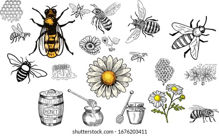 Hand Drawn Vintage Honey bee art stock vector illustration silhouette - Design Logo Magazine Poster Banner design elements