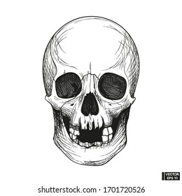 Hand drawn vintage human skull engraved style.