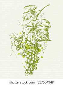Hand drawn Vintage illustration of a bunch of grapes with leaves isolated on textured paper background