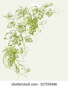 Hand drawn Vintage illustration of a grapevine with fruits isolated on paper background with copyspace