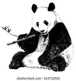 3ad2a3c4560a Hand drawn vintage illustration of panda eating bamboo. Isolated vector  illustration