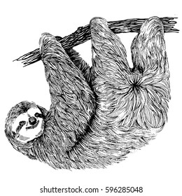 Hand drawn vintage illustration of sloth on a tree