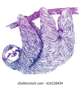 Hand drawn vintage illustration of sloth on a tree. Colorful vector illustration