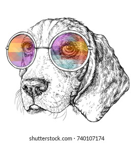 Hand drawn vintage retro hipster style sketch of cute funny Beagle Dog with glasses. Vector Illustration