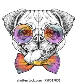 Hand drawn vintage retro hipster style sketch of cute funny Pug Dog in glasses. Vector Illustration
