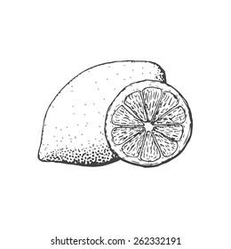 Hand drawn vintage style lemon and a segment of lemon