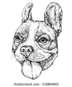 Hand drawn vintage style sketch of funny French Bulldog