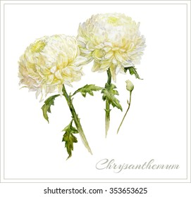 Hand drawn watercolor bouquet of chrysanthemum on white background. Can be used as greeting card, invitation card for wedding, birthday and other holiday and summer background. Vector illustration