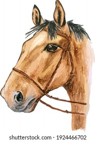 Hand drawn watercolor colorful illustration of brown horse isolated on white background.