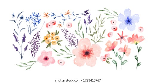 Hand drawn watercolor flower set on isolated white background. Vintage style spring floral decoration.