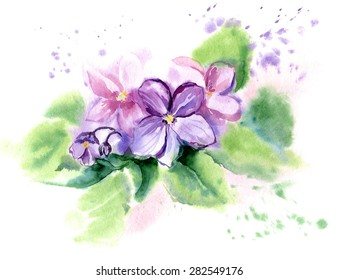 Hand drawn watercolor illustration African Violet Flowers. Vector, Isolated on white background.