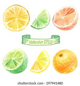 hand drawn watercolor illustration. Citrus set. orange, lime, lemon, grapefruit