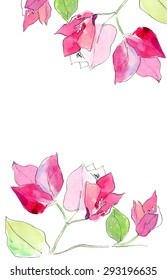 Hand drawn watercolor illustration of Pink Bougainvillea. Vector, Isolated on white background.