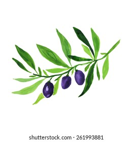Hand drawn watercolor painting on white background. Vector illustration of fruit olives Vector sketch of olive tree branch