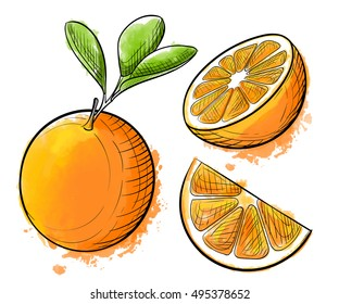 Hand drawn watercolor painting orange on white background. Sketch food vector illustration.