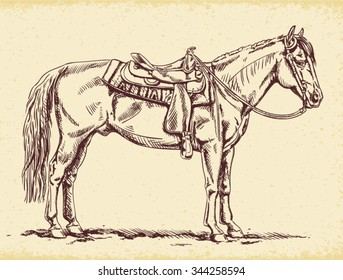 Hand drawn Western Horse standing - American Quarter Horse pen and ink vector drawing