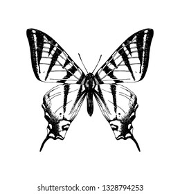 Hand drawn western tiger swallowtail butterfly. Vector illustration