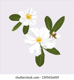 hand drawn white camellia flower blooming in Autumn