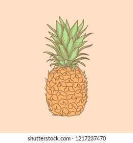 Hand drawn whole, uncut pineapple, sketch style vector illustration isolated on pale pink background. Fresh, ripe fruit, side view.