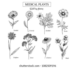 Hand drawn wild hay flowers. Medical herbs and plant. Calendula, Chamomile, Cornflower, Celandine, Cosmos, Yarrow, Thistle, Echinacea. Engraved. Cosmetic, essential oil, package, herbal tea, medicine