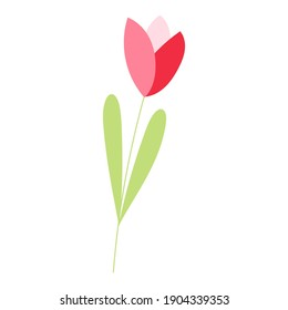 Hand drawn wild spring flower tulip isolated vector