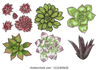 Hand drawn wild tropical house Succulent plants set. Scandinavian mood home decor creator. Elements for card design. Air plants for terrarium. Vector.