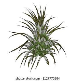 Hand drawn wild tropical house Air plant plant. Scandinavian mood element for card design.  Air plant for terrarium. Vector.