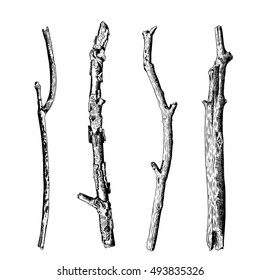 Hand drawn wood twig set,  ink rustic design elements collection. Dry wood tree branch and wooden twig bundle. Detailed and precise ink drawing driftwood twigs set in engraved style. Vector.