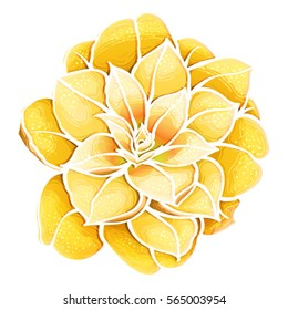 Hand drawn yellow Rose Camellia Flower isolated on white background. Vector  Botanical illustration. Beautiful exotic golden flower.