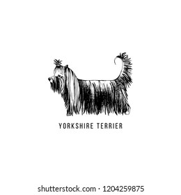 Hand drawn Yorkshire Terrier. Vector illustration in retro style