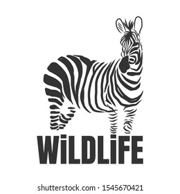 Hand drawn zebra with wildlife text isolated on a white backgrounds. Design element. Vector illustration, Creative idea of a wild animal icon.