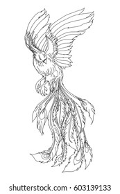 hand drawn zentangle and doodle style phoenix bird