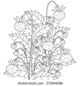 Hand drawn zentangle Forest berries for Black and white anti stress coloring book for adult. Vector illustration in zentangle style