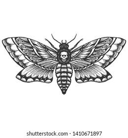 hand drrawn monochrome deadhead butterfly isolated vector