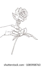 Hand holding a rose flower. Hand drawn sketch, Vector illustration.