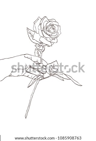 Hand Holding Rose Flower Hand Drawn Stock Vector Royalty Free