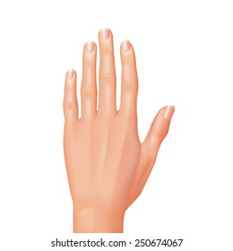 Hand isolated on white photo-realistic vector illustration