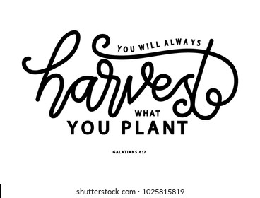 Hand lettering You Will Always Harvest What You Plant on white background. Bible quote. Modern calligraphy. Motivational inspirational quote.