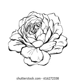 Hand made vector abstract graphic ink peony or rose flower isolated on white background. Outline design elements for boho wedding, birthday, save the date card