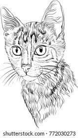 Hand painted cute cat for coloring books