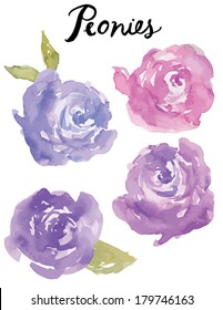 Hand Painted Purple Watercolour Peonies Floral Vector