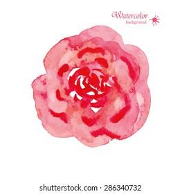 Hand Painted Watercolor Flower Vector. Vector Watercolor Flowers. Watercolor Rose Vector