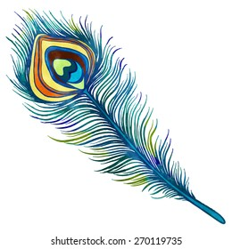 Hand painted watercolor peacock feather closeup isolated on white background. Art scrapbook element, hand drawn
